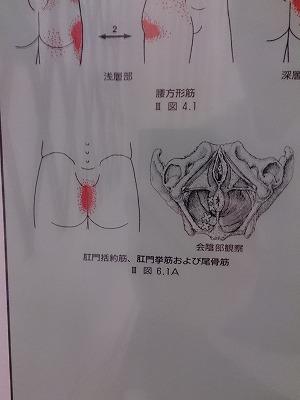 肛門括約筋